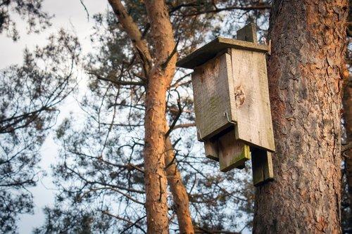 booth for birds  forest  bird feeding tray