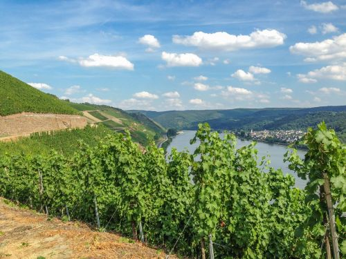 boppard hamm,rhine,middle rhine,germany,river,sachsen,water,romantic,sky,rheinland,romance,landscape,nature,view,weltkulturebe,vineyard,vines,riesling,wine,winegrowing,vine,summer,middle rhine valley,winemaker,free photos,free images,royalty free