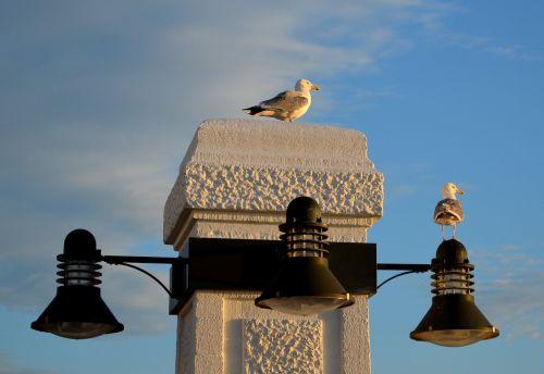 borkum promenade gulls