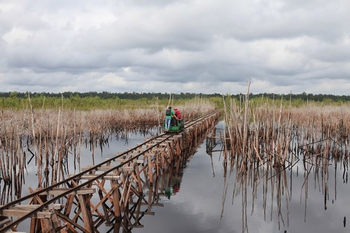 borneo  peat swamp  national park