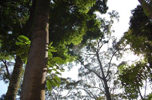 borneo  jungle  rain forest