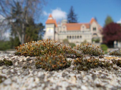 bory-city castle building
