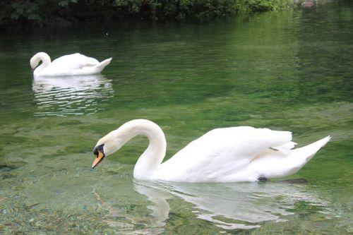 igman lake bosnia