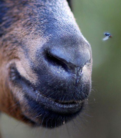bot pet capra