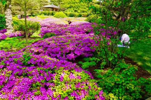botanic garden japanese garden landscape