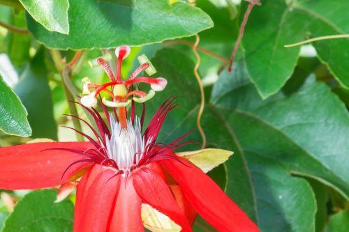 botanic garden puerto vallarta flower