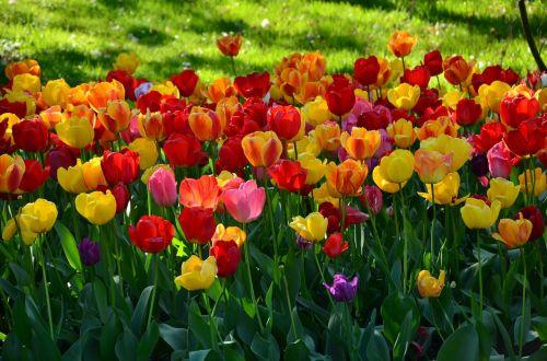 botanic garden garden flowers