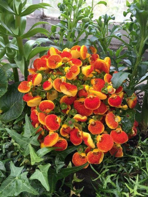 botanikos,sodas,toronto,gėlės,sodininkystė,botanikos,gėlių,natūralus