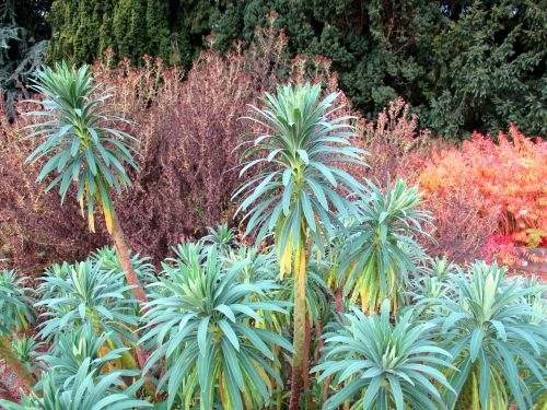 botanical garden botany plant