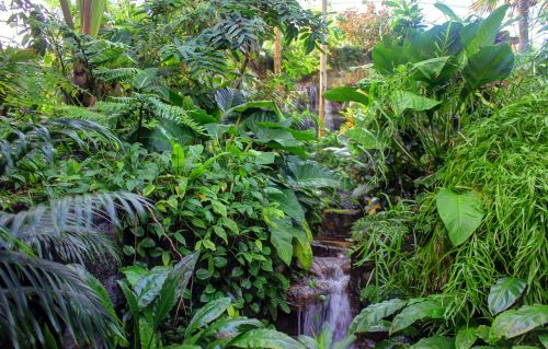 botanical garden arboretum plants