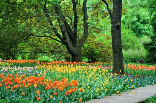 Botanical Gardens, Moscow