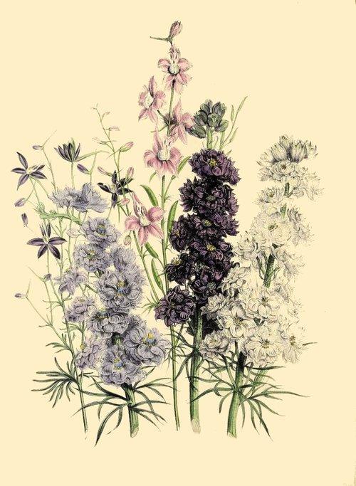 botanical print  antique  floral
