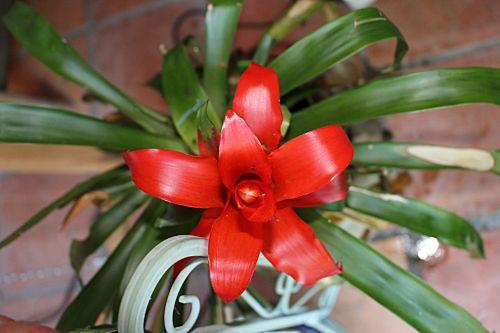 botany exotic tropic