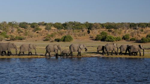 elephant africa river