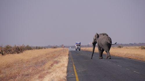 botswana elephant road
