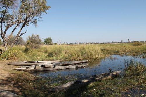 botswana  the okavango delta  mokoro