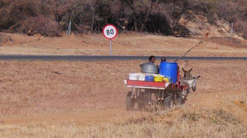 botswana donkey carts traffic