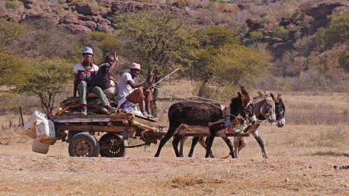 botswana donkey carts transport