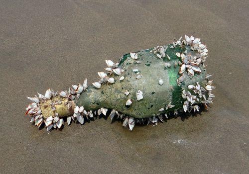 bottle shells marine organisms