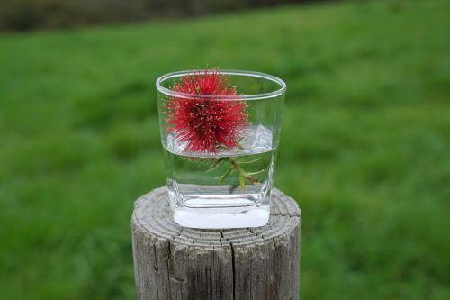 bottle brush flowers in a cup informal