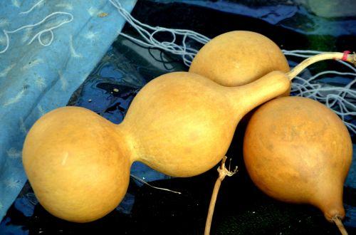 Bottle Gourd (a)