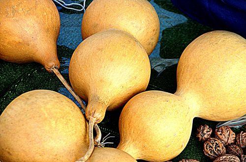 Bottle Gourd (b)