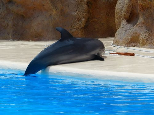 bottlenose dolphin dolphin help