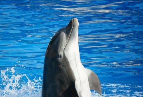 bottlenose dolphin marine mammal fish