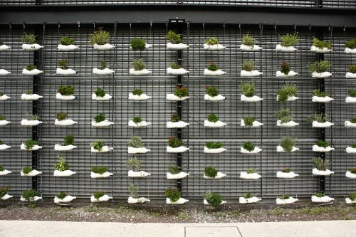 bottles plants planting