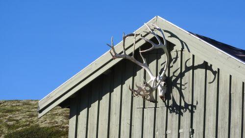bouda antlers reindeer antlers