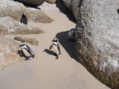 boulders penguins sand rock