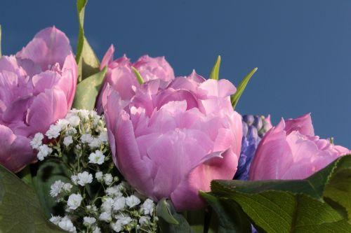 puokštė,dvigubos tulpės,užpildytas,rožinės tulpės,gypsophila,kvepalai,pavasario puokštė,skintos gėlės