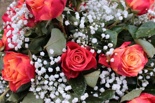 bouquet red roses gypsophila
