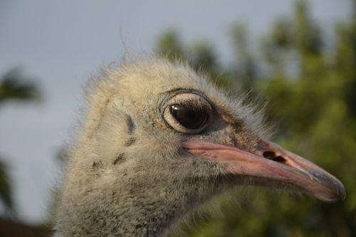 bouquet ostrich head bird
