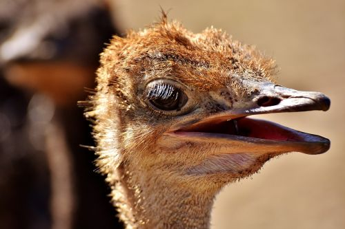 bouquet ostrich farm cute