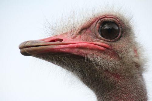 bouquet bird ostrich
