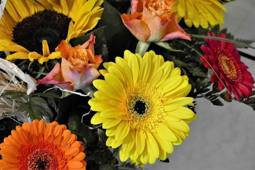 bouquet colorful gerbera