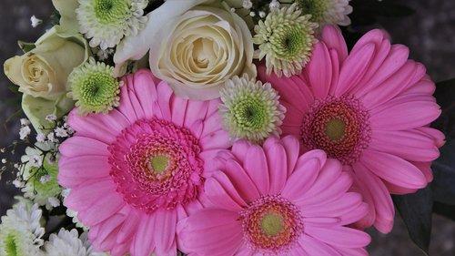 bouquet  the smell of  gerberas