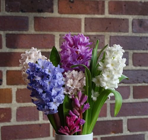 bouquet of flowers hyacinth spring