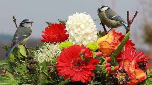 gėlių puokštė su paukščiais,mėlynos tits,gėlės,Gerbera,nuotrauka iš titmouse,gėlių kompozicija,natiurmortas,spalvinga,paukščio pora,pasveikinimas,sveikinu
