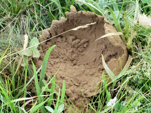 bovist mushroom mushroom dust