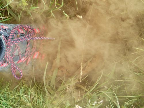 bovist mushroom dust