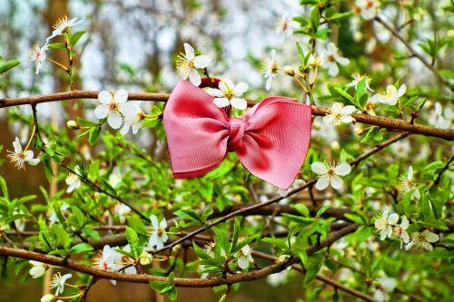 bow bow tie ribbon