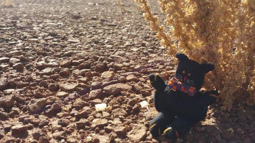 Bow Tie Kitty Desert