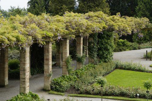 bower portico wisteria