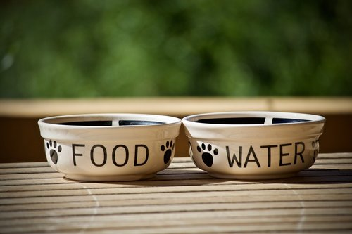 bowls  containers  dogs