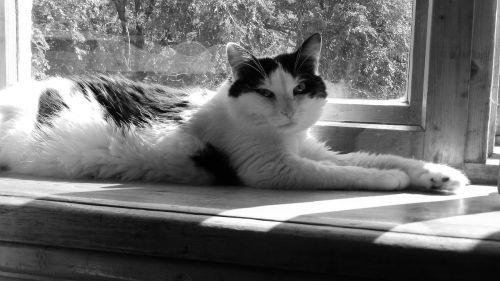 box cat felix