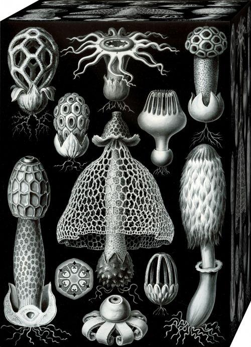 Box Full Of Mushrooms