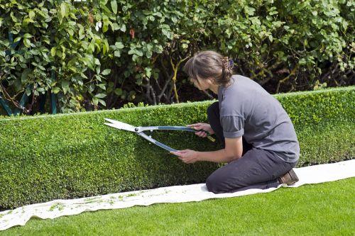box hedge topiary shears gardener