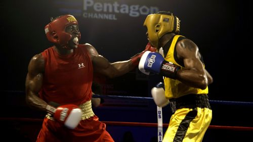 boxers males boxing